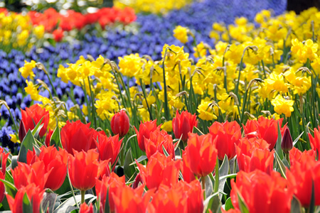 Flowers Exhibition