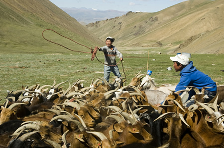 Mongolian Lasso