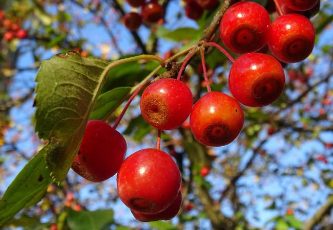 Deutsche Bank, Fruit Tree