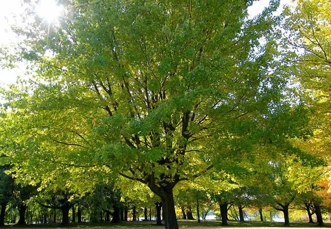 Deutsche Bank, Green Tree