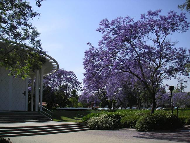 University Rankings, Caltech